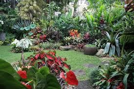 Tropical Backyard Ideas Tropical Backyard Ideas Marceladick