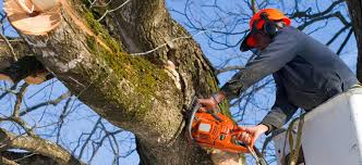 g v tree and landscaping services tree removal in va dc md