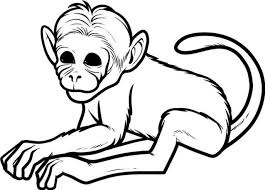 coloring pages cool baby monkey coloring pages monkeyjpg