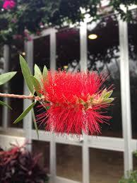 planting the seeds of innovation native plants gardening app lenhardt library blog posts chicago botanic garden