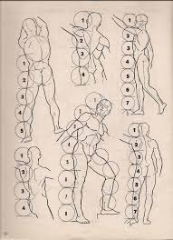 Human Anatomy Reference 224 Best Anatomy Body Images On Pinterest Anatomy Reference