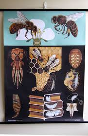 pulldown canvas honey bee print poster chart wall hanging amazing