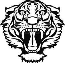 tiger black white stock vector illustration of bengal 17520630