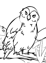 animal printable coloring pages free coloring pages of animals