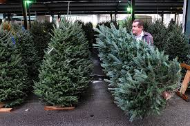 real christmas trees for sale fir real christmas trees in crisis as americans flock to fakes wsj
