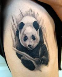 panda bear tattoos meanings designs pictures and ideas tatring