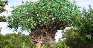 7 amazing facts about animal kingdom s tree of