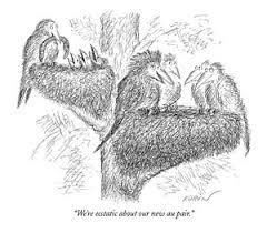 bird nest drawings fine art america