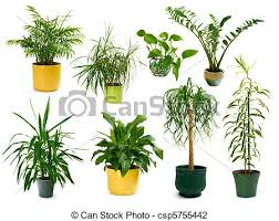 indoor plants singapore eight different indoor plants in a set collection of eight stock