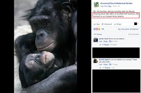 creationists are mad that the cincinnati zoo said bonobos are our