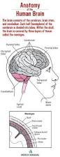 534 best a u0026p neurological system images on pinterest neurology