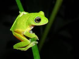 amphibians window to nature