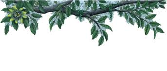 tree wall decal plants wall stickers walls of the