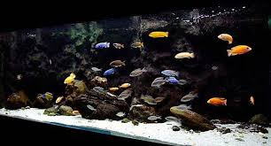 freshwater aquarium fish clearwater liquid therapy aquariums