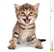 beautiful cute little kitten meowing and smiling royalty free