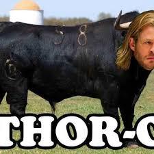 Funny Thor Memes - thor meme s a trend