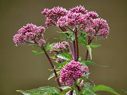 irish native plants wild flowers species in ireland archives seed bomb wild flowers