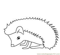 mammals coloring pages free printable coloring page hedgehog mammals gt hedgehogs