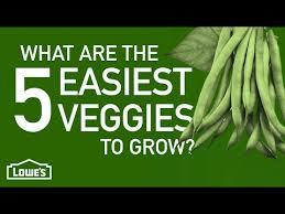 5 easy vegetables to grow videoclip vegetarian pinterest