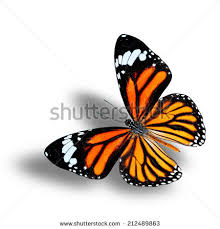 flying common tiger butterfly shadow stock photo 212489863