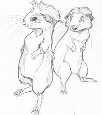guinea pigs by maziana on deviantart