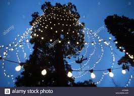 how to fix xmas lights on tree workman in safety harness abseiling from a branch to fix christmas