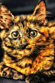 halloween cats 2113 best other cats images on pinterest animals kitty cats and