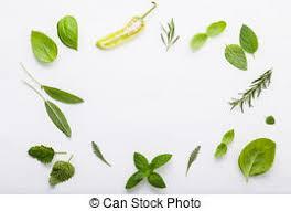 sarriette cuisine romarin citron jardin thym plat bois doux sauge images