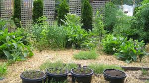 how to build no dig garden gardening tips youtube