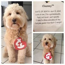 Cheap Dog Costumes Halloween 25 Beanie Baby Costumes Ideas Pet Halloween