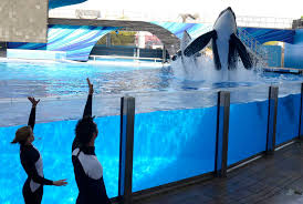 seaworld orlando thanksgiving infections prove to be killer at sea parks houston chronicle