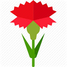 carnation floral florist flower garden icon icon search engine