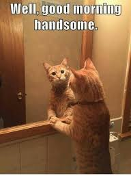 Handsome Meme - well good morning handsome meme on me me