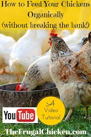 250 best chickens images on pinterest raising chickens backyard