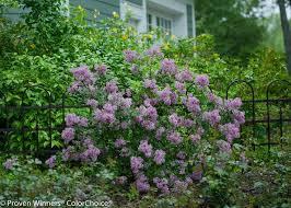 Fertilizer For Flowering Shrubs - 30 best my southern garden shrubs images on pinterest garden
