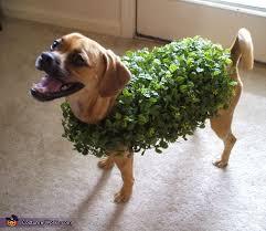 Small Dog Halloween Costumes 25 Pet Halloween Costumes Ideas Puppy
