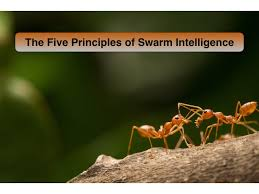five principles of swarm intelligence youtube