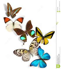 group of butterflies royalty free stock photos image 34609298