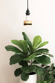 what is the best lighting for growing indoor how to use grow lights for indoor plants dossier
