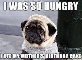 Pug Birthday Meme - meet sympathy seeking pug album on imgur
