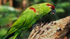 parrot san diego zoo animals u0026 plants