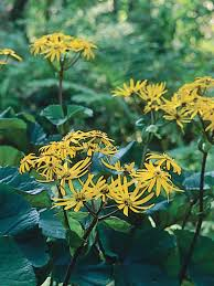 perennial plants for fall perennial flowers hgtv