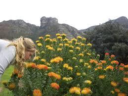 top world s most beautiful gardens garden trends