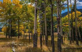 rocky mountain national park wallpapers wallpaper usa clouds autumn the sun forest rocky mountain