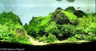 Aquascaping Guide The Nature Style Planted Tank Aquascape Awards