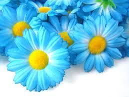 cheap flowers to send die besten 25 send flowers cheap ideen auf hochzeit