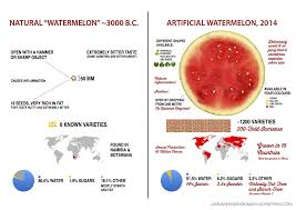 Artificial Vs Natural Watermelon U0026 Sweetcorn James Kennedy