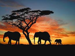 elephant wallpaper hd wallpapers