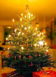 christmas tree new world encyclopedia