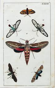 Moths In Kitchen Cabinets Antique Print Albertus Seba Cabinet Of Natural Curiosities